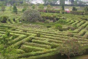 Taman Bunga Puncak
