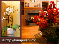 http://kumpulaninformasi.files.wordpress.com/2009/01/tanaman-interior.jpg?w=200&h=150